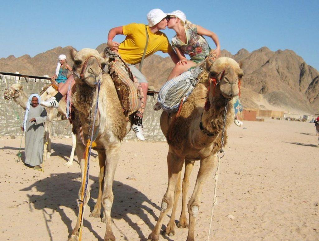 Египет поцелуй на верблюдах собственные фото из путешествия