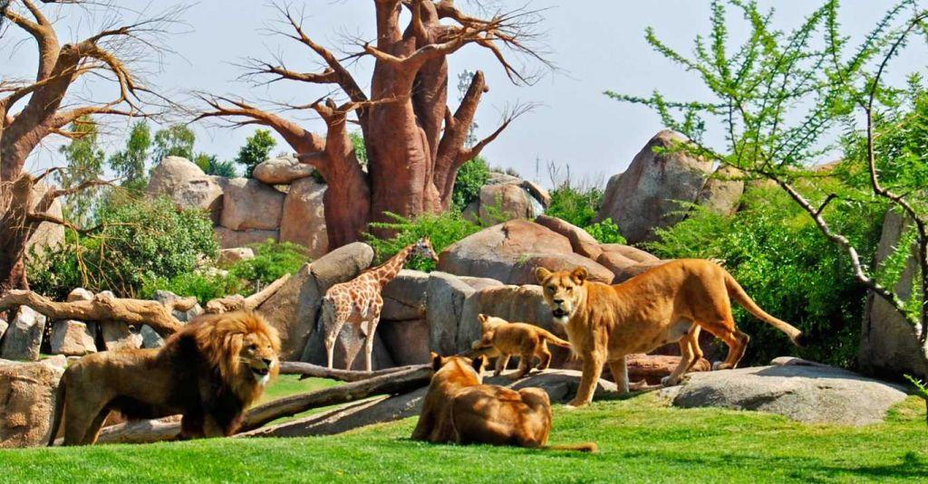 что посмотреть в валенсии зоопарк биопарк