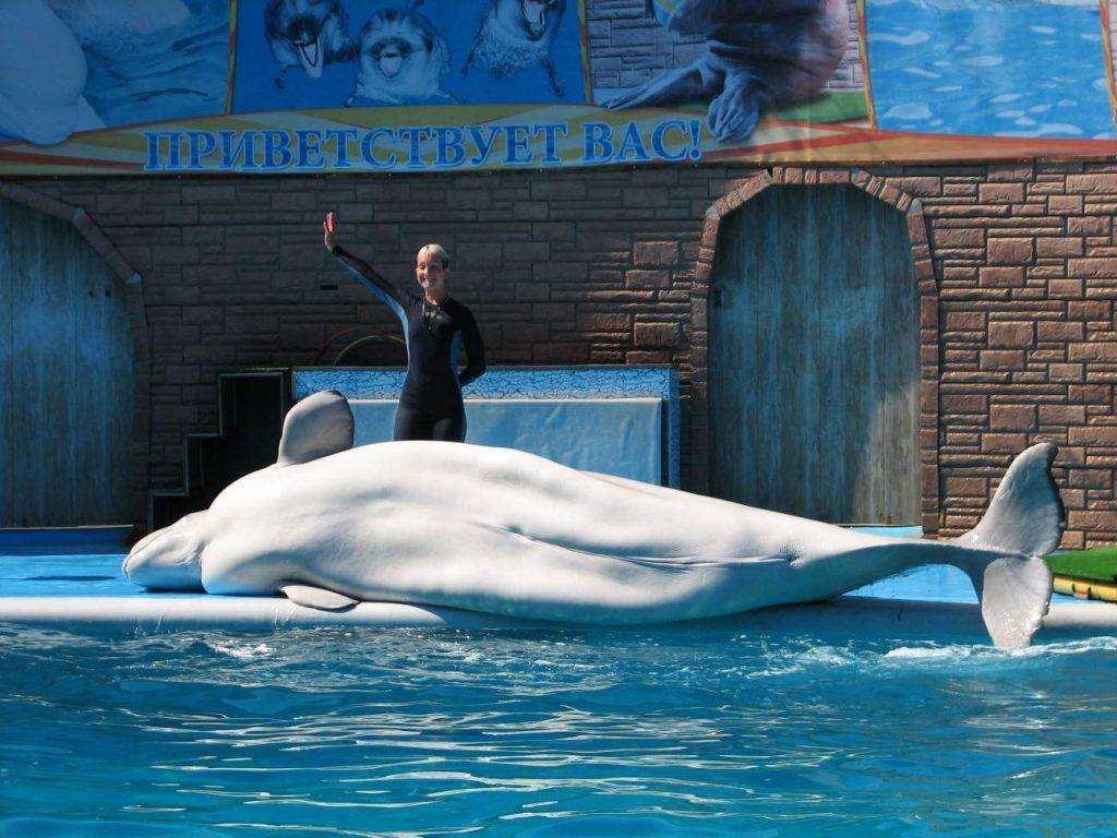 Дельфинарий Акватория Адлер - что посмотреть в сочи самостоятельно летом