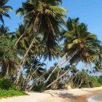 Шри-Ланка зимой: рай, куда можно поехать отдыхать на море